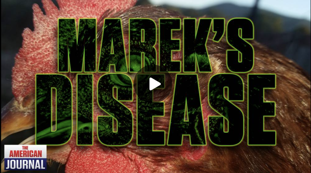 Mareks Disease How The COVID Vaccine Is Breeding A Super Virus EXZM Zack Mount August 27th 2021
